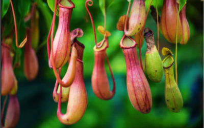 Fascinating oddities of the plant world