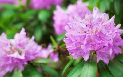 Beautiful winter plants –  Bring colour and texture to any winter project