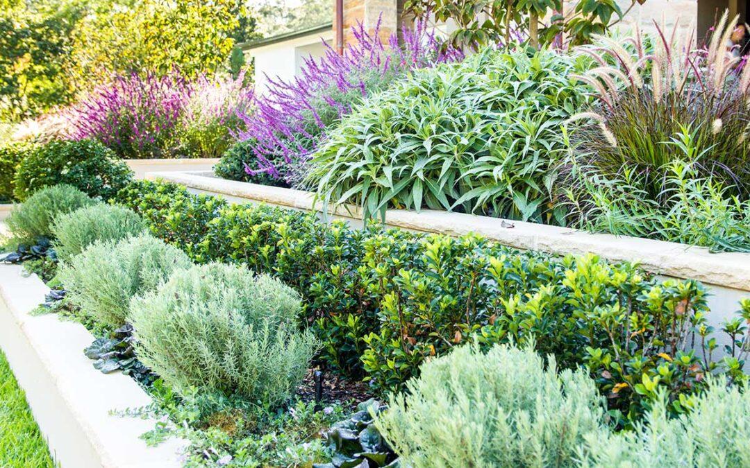 Formal Garden Wahroonga
