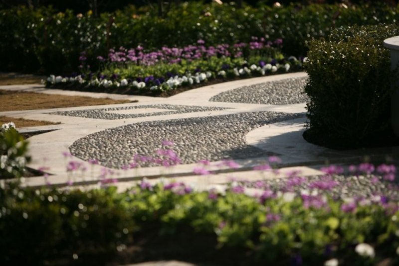 Grand scale formal garden Project completed by Rolling Stone Landscapes in 2004.  Alpine Nurseries is proud to be a supplier to Rolling Stone Landscapes and has supplied and sourced a wide range of plant material for them over many years. Recently Rolling Stone were involved in the design and construction of a spectacular formal garden that incorporated a wide range of plants from very tall instant hedges to low formal hedges as well as many decorative flowering plants and foliage colours.  Many of the plants were grown on especially for the project by Alpine to provide the highest quality stock for such a prestige assignment. This process also gave Alpine the ability to grow some of the hedging plants to a specific height that was nominated by Rolling Stone. It is a great example of how with time and good communication between the designer and the nursery fantastic results can be achieved.  Feature trees that were used in the project were 200litre Magnolia grandiflora 'Exmouth' with 100litre Cupressocyparis 'Leighton Greens' being used as the super tall hedging. Other plants that were used on site included Murraya, Gardenia Florida, Camellia sasanqua and Syzygium Resilience. Syzygium Resilience was used in large numbers to minimize ongoing maintenance; this variety was selected due to its resistance to psylids.  This garden has been used for a charity fund raising party and was also featured on television on Better Homes and Gardens. Featured plants      Magnolia grandiflora 'Exmouth' - 200 litre     Cupressocyparis 'Leighton Greens' - 100 litre     Murraya     Gardenia Florida     Camellia Sasanqua     Syzygium Resilience