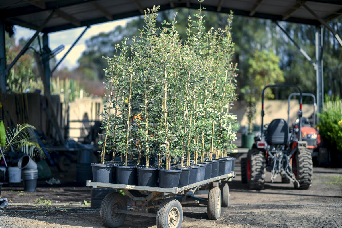 plants on trailer ready for shipment