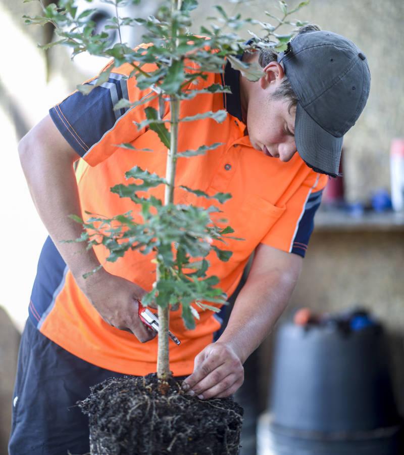 Trade Applications man repotting tree