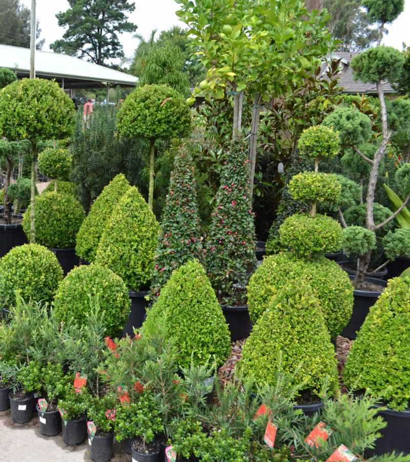 Trademart rows of potted plants